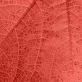 与小下落和静脉的居住的珊瑚叶子纹理 免版税库存图片