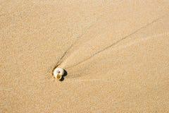 与小壳的沙子纹理 免版税库存照片