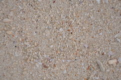 与小壳的沙子 库存照片