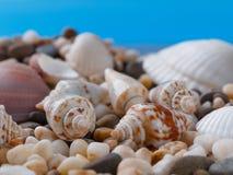 与小小卵石的贝壳在蓝色背景 宏指令 库存图片