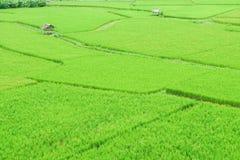 与小小屋的绿色米领域 库存图片