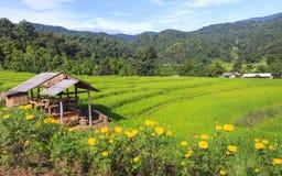 与小屋和黄色花的绿色米大阳台领域 免版税图库摄影