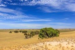 与小山和草甸的南澳大利亚风景有灌木和土路的反对蓝天与云彩面纱 库存照片