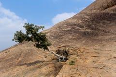 与小山岩石的一棵树与sittanavasal洞寺庙复合体天空  库存照片