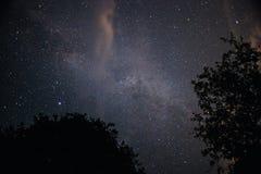 与小山的清楚的在前景的夜空和树 免版税库存图片