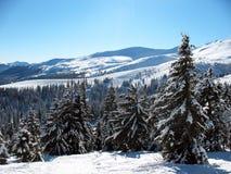与小山的积雪的山峰在乌克兰包括冷杉木森林喀尔巴汗的冬天风景 免版税库存照片