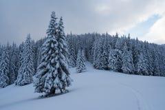 与小径的冬天风景在雪 免版税库存图片