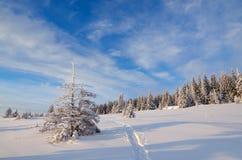 与小径的冬天风景 图库摄影