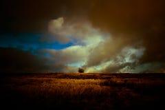 与小树朱利安区域的一个风雨如磐的被点燃的风景 免版税库存图片
