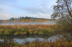 与小森林河的有雾的秋天风景 免版税库存照片