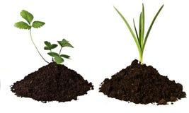 与小植物的构成 免版税库存图片