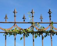 与小植物的钢fench 库存照片