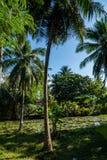 与小池塘的棕榈树 库存照片