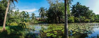 与小池塘的棕榈树 免版税库存图片