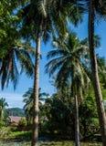 与小池塘的棕榈树 免版税库存照片