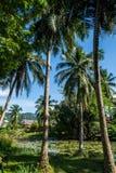 与小池塘的棕榈树 图库摄影