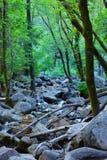 与小河、岩石和wate的美好的森林场面 库存照片