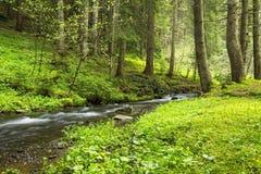 与小河流动的绿色森林植物群落 库存照片