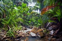 与小河的密林风景 免版税库存照片