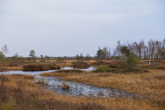 与小河的沼泽在秋天 库存图片