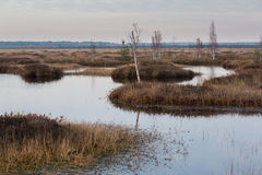 与小河的沼泽在秋天 库存照片