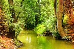 与小河的狂放的森林风景 库存照片