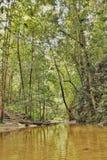与小河的雨林 免版税库存照片