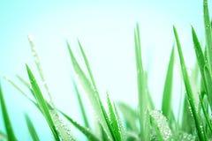 与小滴的新鲜的绿草在雨背景以后 免版税库存照片