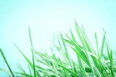 与小滴的新鲜的绿草在雨背景以后 库存照片