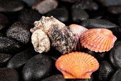 与小滴的贝壳和温泉石头在黑背景 免版税库存图片