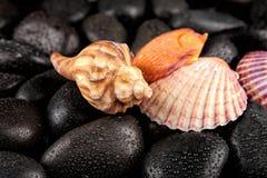 与小滴的贝壳和温泉石头在黑背景 免版税库存照片