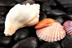 与小滴的贝壳和温泉石头在黑背景 库存图片