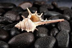 与小滴的贝壳和温泉石头在黑背景 库存照片