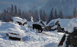 与小牛的雪小屋 库存图片