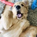 与小狗的乐趣 库存照片