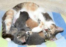 与小猫的母亲猫 免版税库存照片