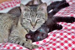 与小猫的虎斑猫 免版税库存图片