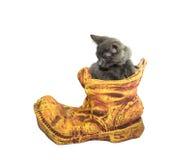 与小猫的黏土花盆 免版税图库摄影