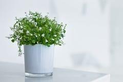 与小白花的白色花盆 库存图片