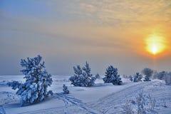 与小的杉木的冬天横向。 库存照片