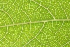 与小的蜘蛛的绿色事假 免版税图库摄影