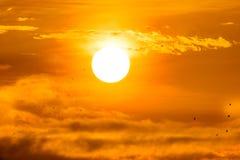 与小的鸟的朝阳 免版税库存照片