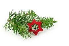 与小红色圣诞节星的冷杉分支,隔绝在白色后面 免版税库存照片
