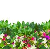 与小苍兰的五颜六色的花边界,银莲花属,上升了,雏菊,毛茛,被隔绝 免版税库存图片
