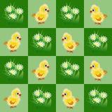 与小鸡和春黄菊的无缝的啪答声 免版税库存图片