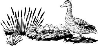 与小鸡的母鸭子 免版税库存照片
