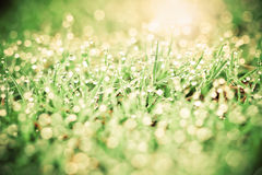 与小滴和秀丽bokeh背景的草 库存照片