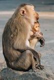 与小猴子的母亲猴子 免版税图库摄影
