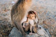 与小猴子的母亲猴子 图库摄影