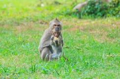 与小猴子的母亲猴子 免版税库存照片